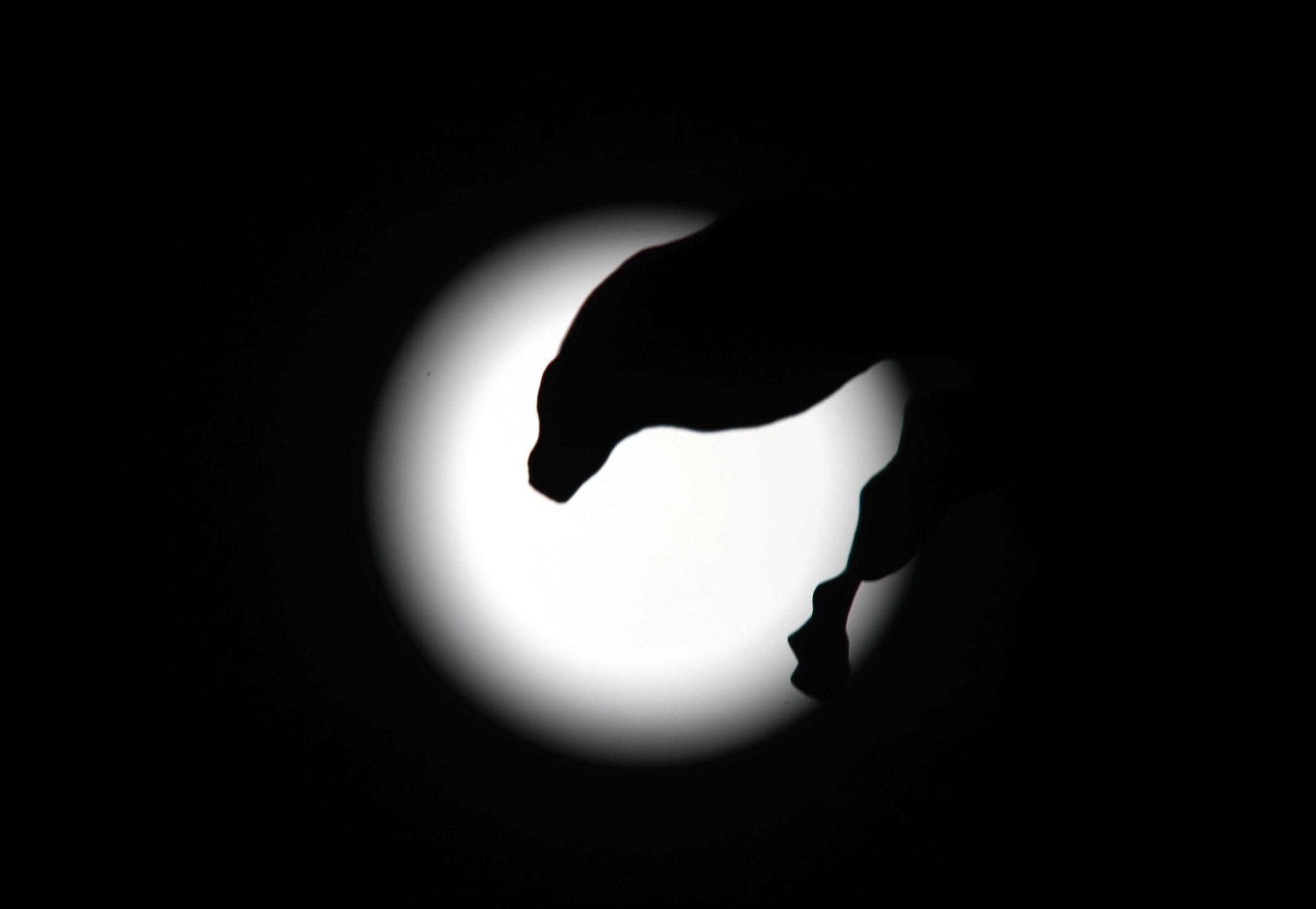 中午的超级红月亮,晚上的超级圆月亮,郑州高清实拍图来了!