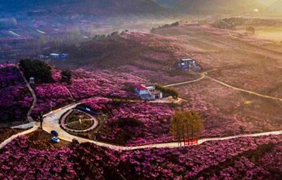 驻马店南阳濮阳被授予国家森林城市