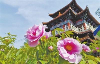 洛阳牡丹文化节赏花游园及惠民措施方案发布