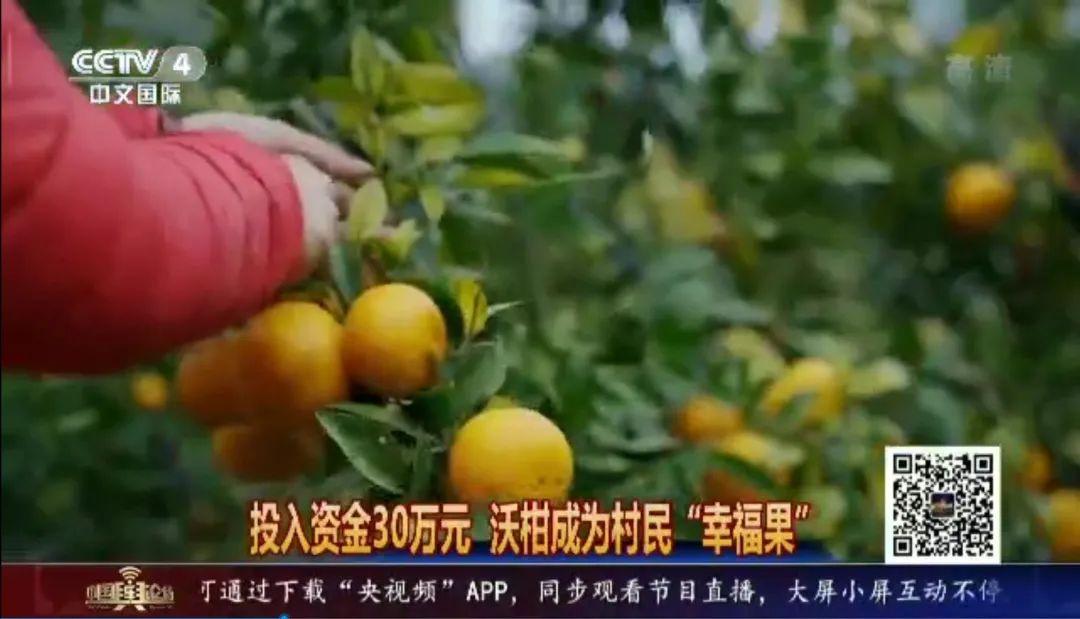 中央电视台《中国舆论场》走进中国人寿扶贫点