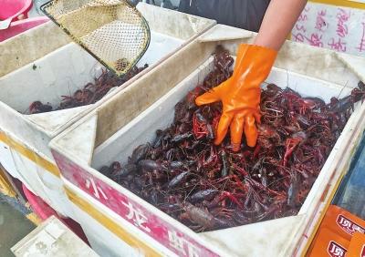 小龙虾市场为啥跳水了?