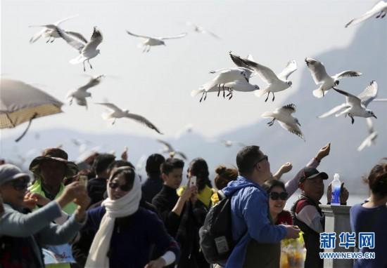 #(社会)(7)2019年春节假期全国旅游接待总人数4.15亿人次