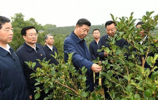 习近平在光山县深入油茶园和农村考察调研