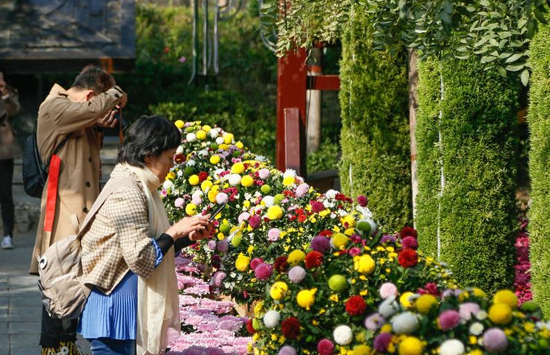 品秋赏菊!中国开封第八届国际菊花展开幕