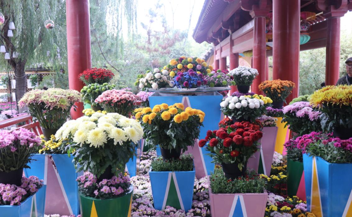 奋进七十年 出彩开封城 中国开封第37届菊花文化节开幕