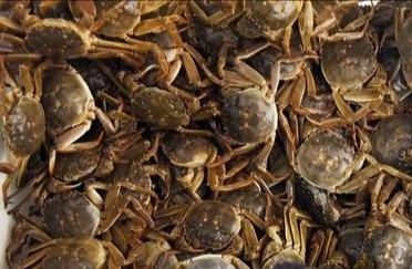 咋判断大闸蟹的真实产地?
