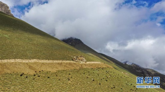 """(环境)(4)新疆塔什库尔干:""""云端牧场""""生态美"""