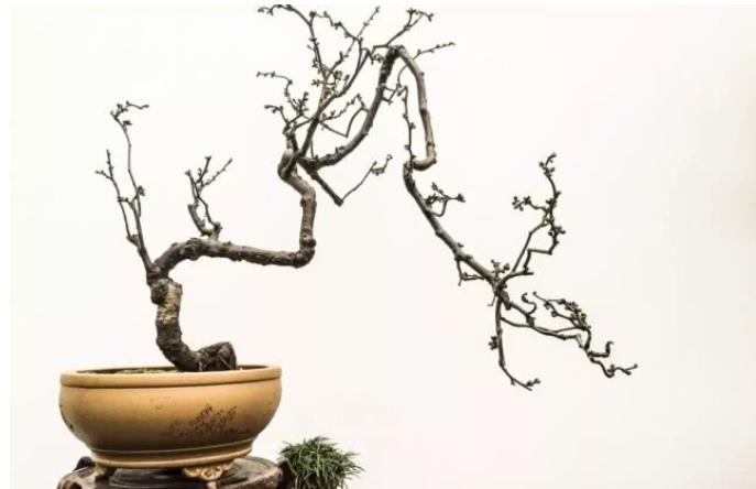 第八届中国·鄢陵蜡梅梅花文化节盛装启幕