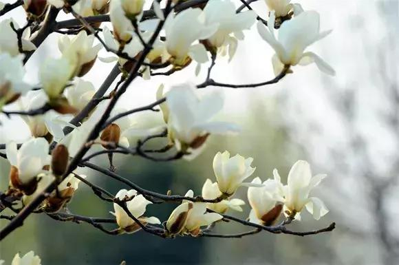 绿博园:2019春季问花节3月30日开幕