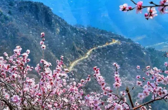 春游踏青哪里去?去关山看连翘,到秋沟赏桃花