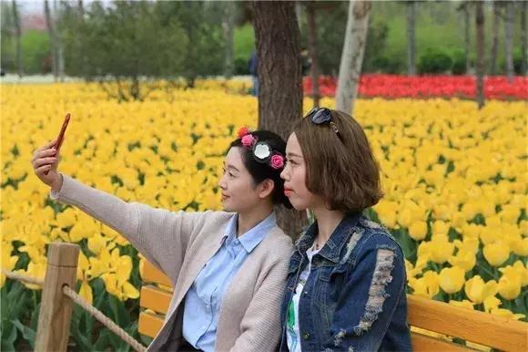 绿博园问花节本周六盛大开幕