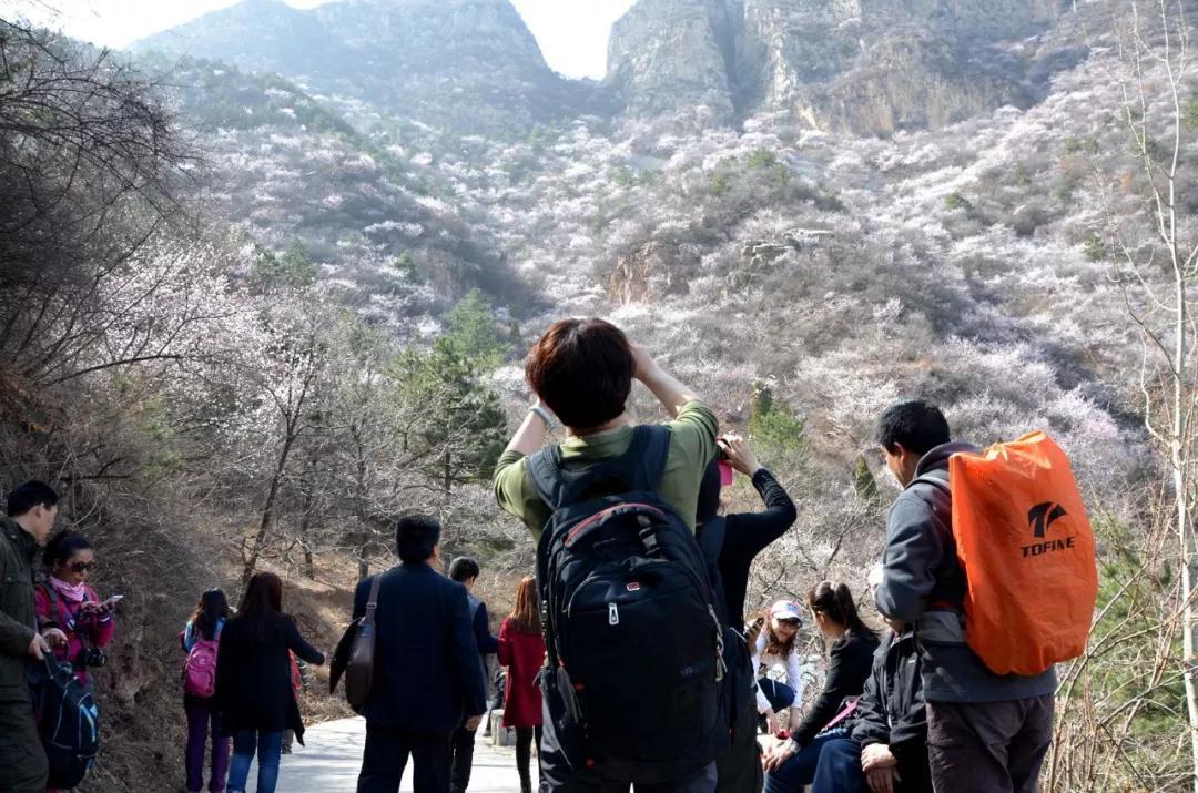 @所有人,豫北最大的野生山桃花基地进入最佳赏花期!