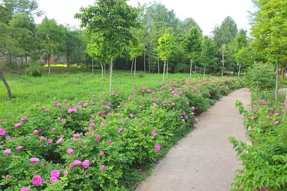 绿博园:五一近郊游,赏花正当时