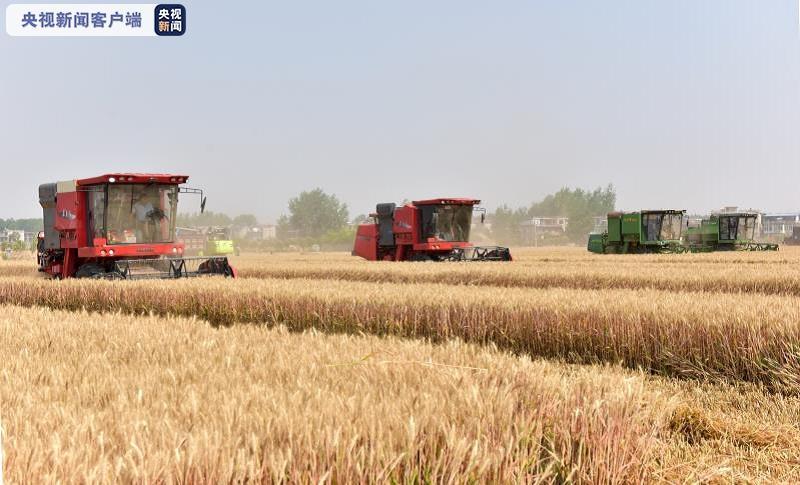 亩产819.85公斤!安徽小麦单产再创新高