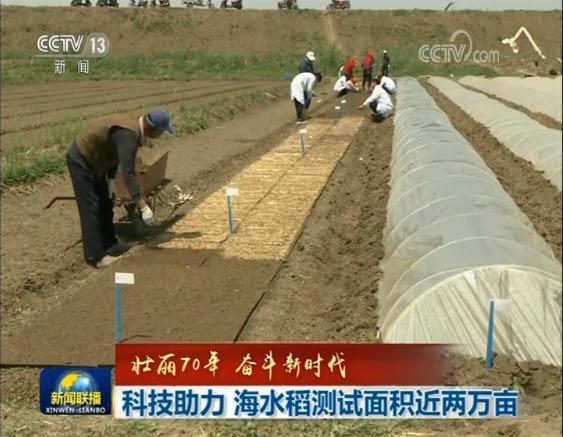 【壮丽70年 奋斗新时代】科技助力 海水稻测试面积近两