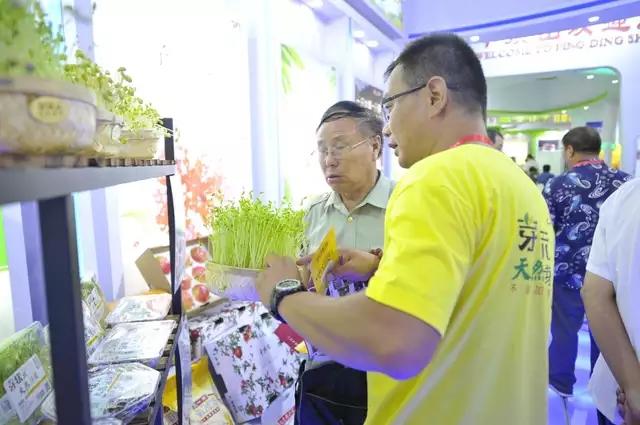 芽状元亮相中国农洽会 玩转古法豆芽的创新表达