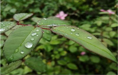 雨下濛濛 凉意清清,未来几天郑州清爽仍是主题