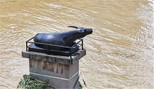 好消息:贾鲁河周口段水位开始缓慢回落