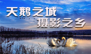 天鹅之城—中国三门峡自然生态国际摄影大展
